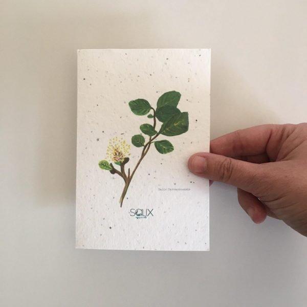 Postal plantable con ilustración del Salix Tarraconensis