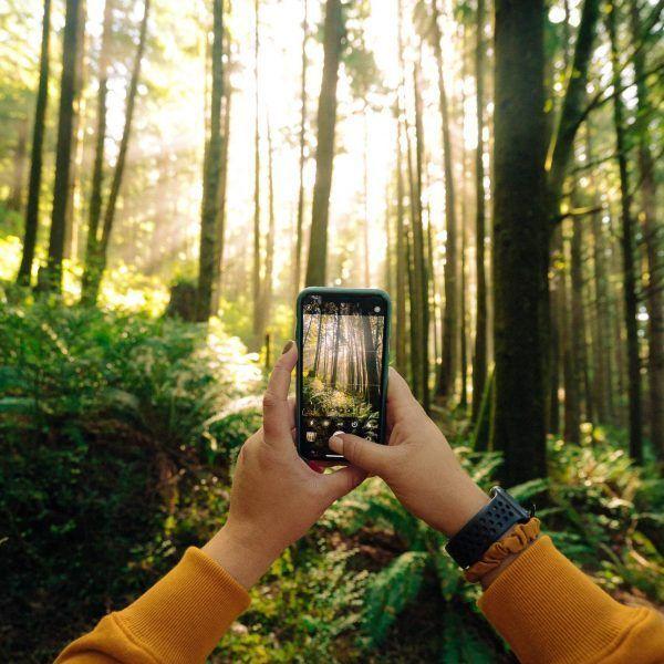 Alguien toma una foto de un bosque frondoso con el móvil
